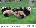 twin, twins, panda 6899103