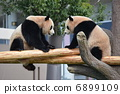 twins, twin, panda 6899109