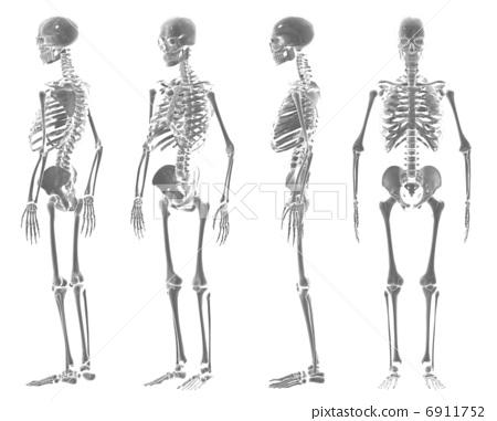 骨架 6911752
