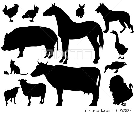 on the farm - set of detailed vector animals silhouettes - black outlines over white 6952827