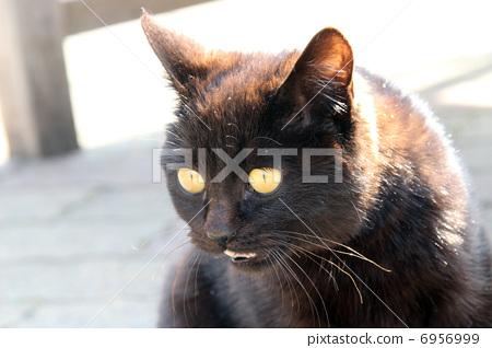 Black cat 6956999