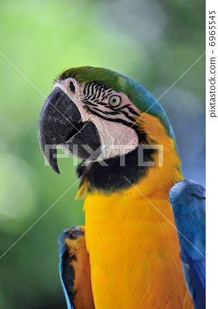 Ruri Macawo 6965545