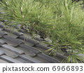 Roof tile and pine needle 6966893