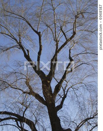 Death of a street tree 6968587