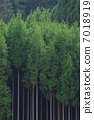 Kitayama cedar 7018919