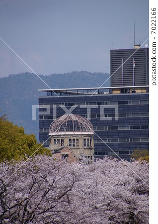 A-bomb Dome and cherry blossoms 7022166