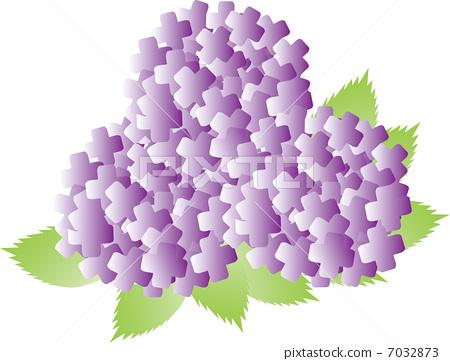 繡球花(紫色,聚會) 7032873