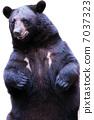 animal, animals, bear 7037323