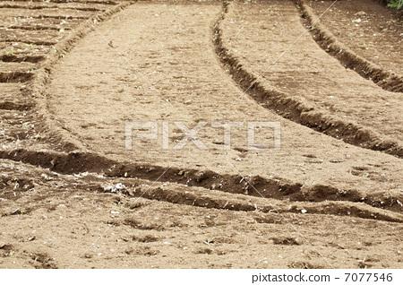 soil 7077546