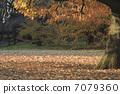 ฤดูใบไม้ร่วงใบไม้ต้นไม้ 7079360