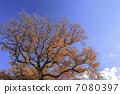 ฤดูใบไม้ร่วงใบไม้ต้นไม้ 7080397