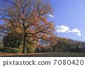 ฤดูใบไม้ร่วงใบไม้ต้นไม้ 7080420