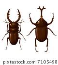甲蟲和雄鹿甲蟲 7105498