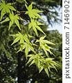 森林公園森林公園新綠色 7146902