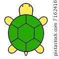 turtle 7162416
