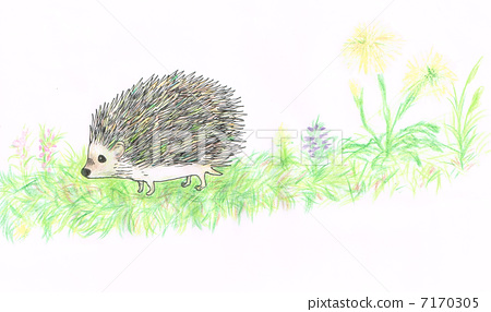 Parent and child frog Mononga and sunflower seeds 7170305