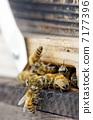 Honey bee box 7177396