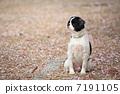 dog, dogs, fallen cherry tree 7191105