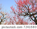 ดอกไม้,ปราสาทโอซาก้า,โอซาก้า 7241680
