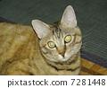Cat 7281448