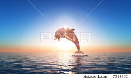 海豚 7318362
