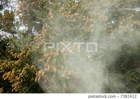 Cedar Pollen 7382412