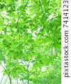 Landscape of fresh green young leaves and sun leaves, background 7414123