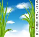 เต่าทอง,ท้องฟ้า,หญ้า 7456335