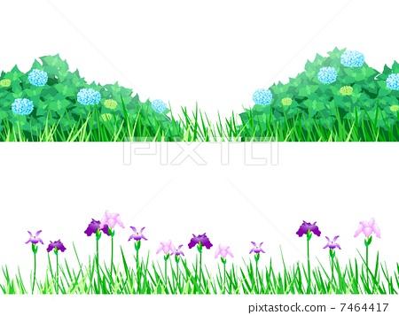 Hydrangea iris 7464417