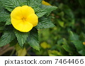 黃色的花朵 7464466