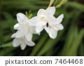 白花和蜜蜂 7464468
