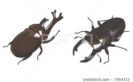 昆蟲 蟲子 漏洞 7464515