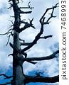 trunk, plants, trees 7468993
