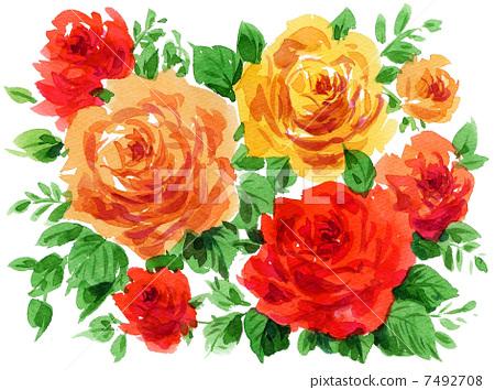 roses13612pix7 7492708
