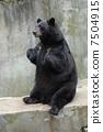 black bear 7504915