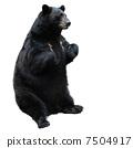 black bear 7504917