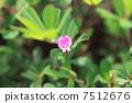 ดอกไม้ของ Jahsou 7512676