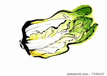 Chinese cabbage 7549247