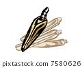 vector, vectors, razor clam 7580626