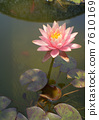 荷花 花朵 花 7610169