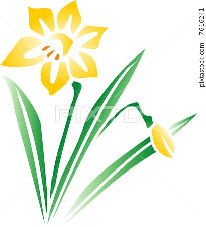 Daffodil 7616241