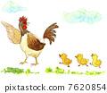 鸡和孩子 7620854