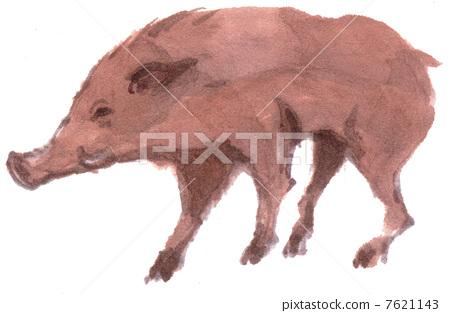 boar 7621143