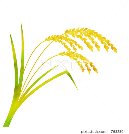 ear of rice  paddy  rice plant stock illustration Corn Plant Clip Art Ear of Corn Coloring Page