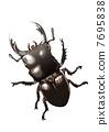雄鹿甲蟲 7695838