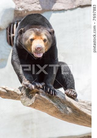 黑熊 7697883