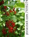葡萄乾在自然界中 7698274