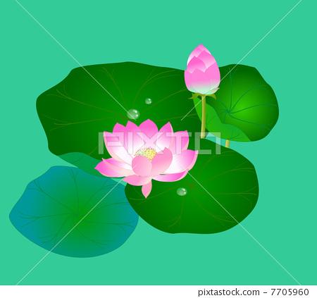 Lotus pond 7705960