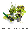 Gardening tools and plants 7733506