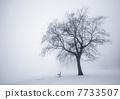 Winter tree in fog 7733507